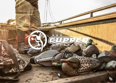Cupped Waterfowl